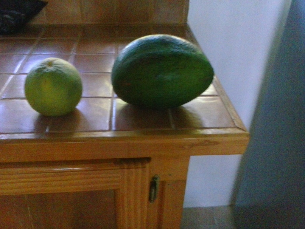 Normal Size Grapefruit with a Grenada Size Avocado.